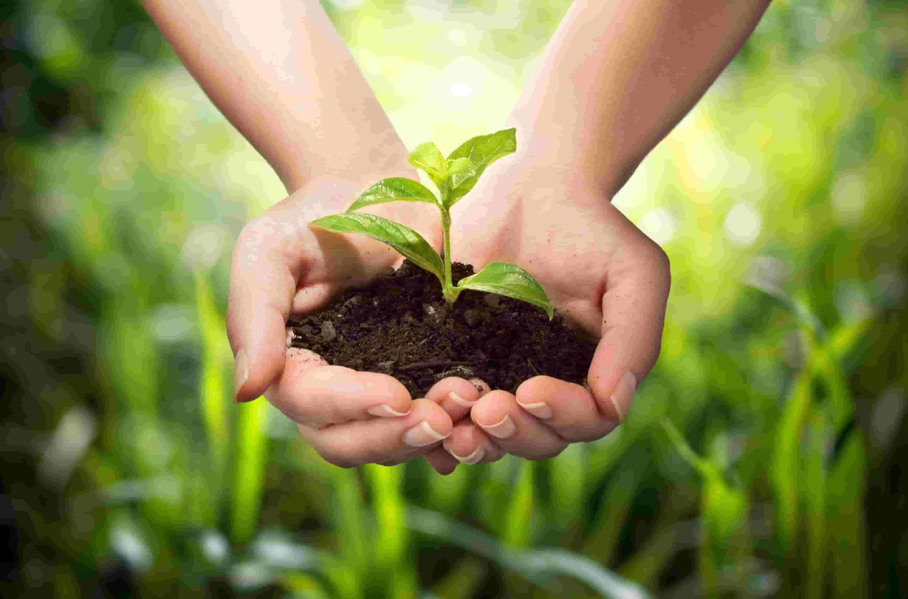 Farmer holding soil