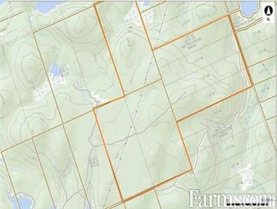 Maple Tree Forested Land for Sale, Whitney, Ontario