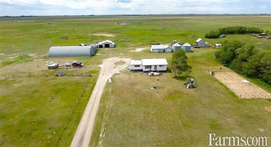Cash Crop for Sale, Young, Saskatchewan